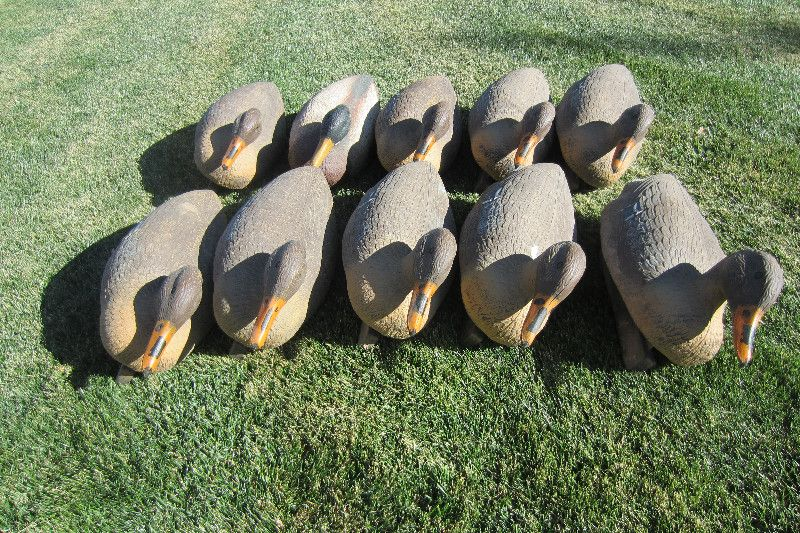 Duck Decoys Dozen