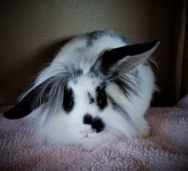 ***Binky*** The MOST adorable Bunny ever!!!