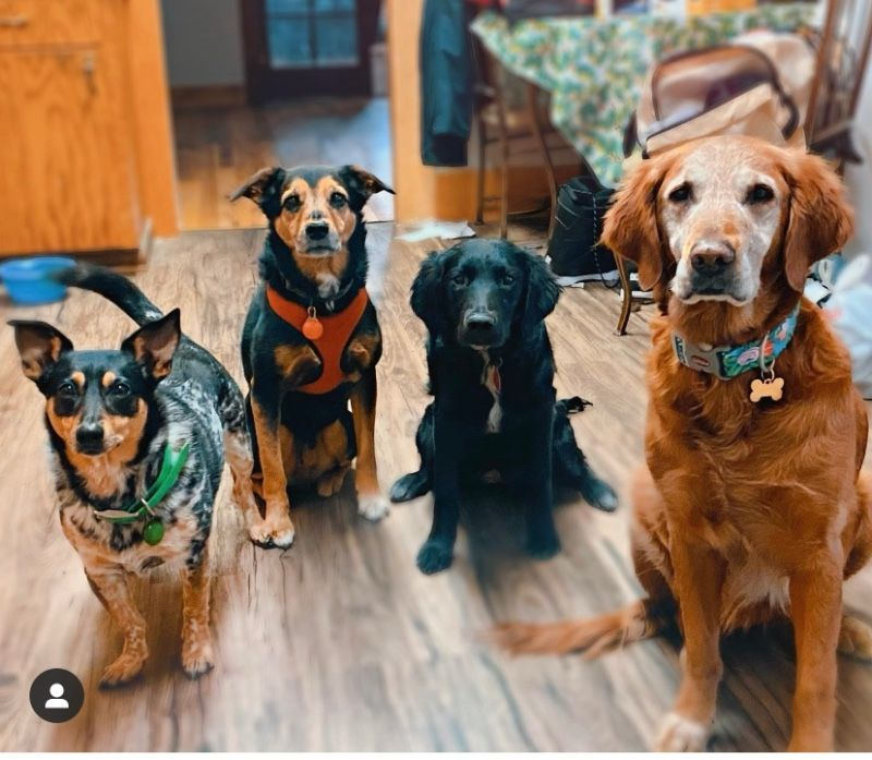 Dog Walking/Training Services Treasure Valley